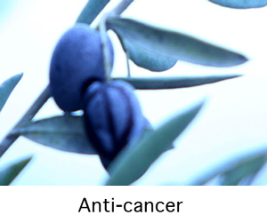 Olive leaf extract helps protect against cancer